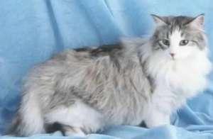 猫咪训练后又开始乱撒尿应该怎么办?