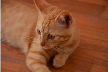 冬天也要美美哒 猫猫冬季美容方法