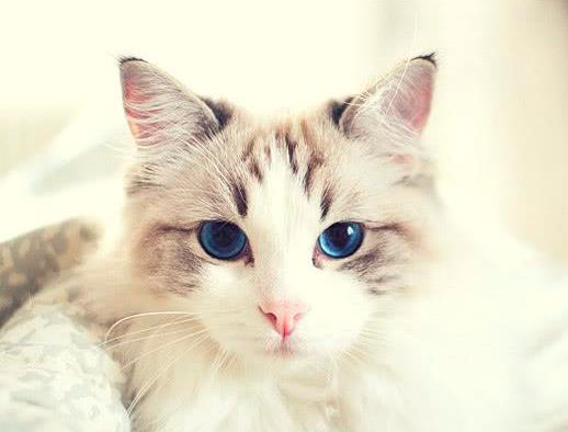 猫咪眼睛和毛发的护理指南