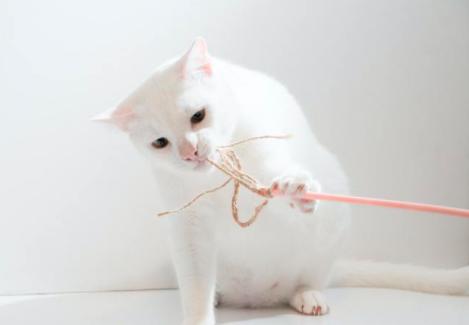 肉爪子也要护理 猫咪足部怎么护理好?