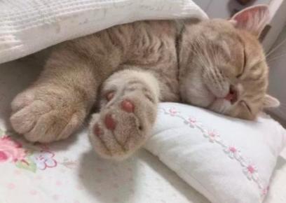 教你培养猫咪的良好生活作息?