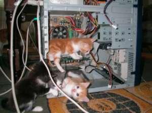如何制止猫猫咬电线?